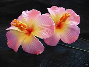 fleur-tahiti